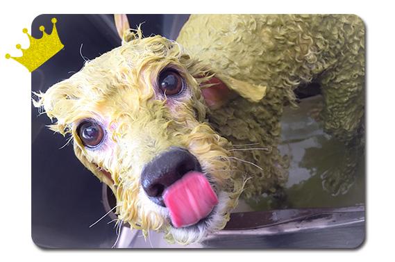 犬のための「アーユルヴェーダ ハーブパック」