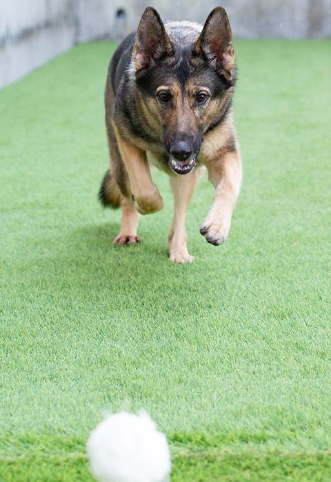大型犬の走れるドッグラン