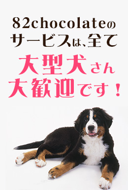 トリミング大型犬大歓迎!